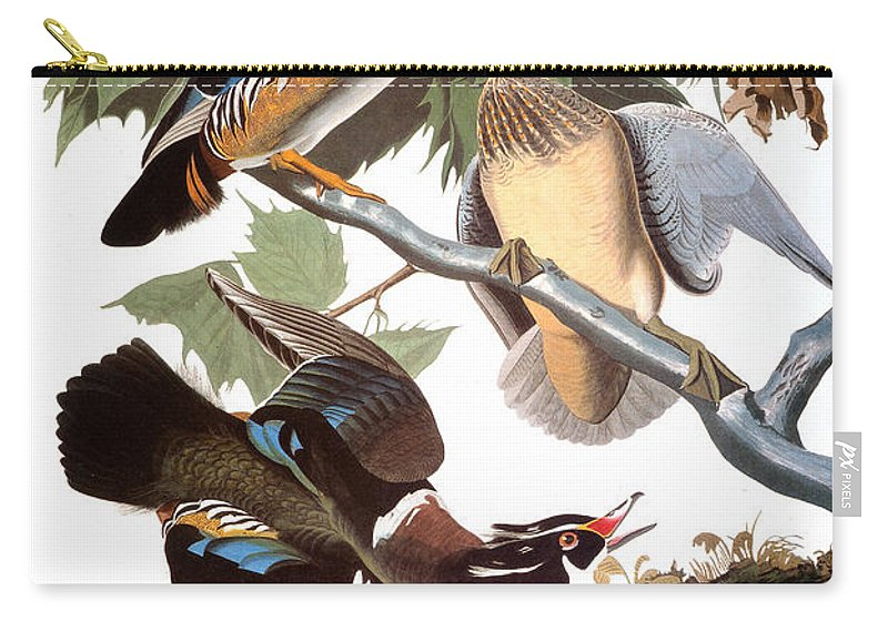 1838 Carry-all Pouch featuring the photograph Audubon: Duck by Granger