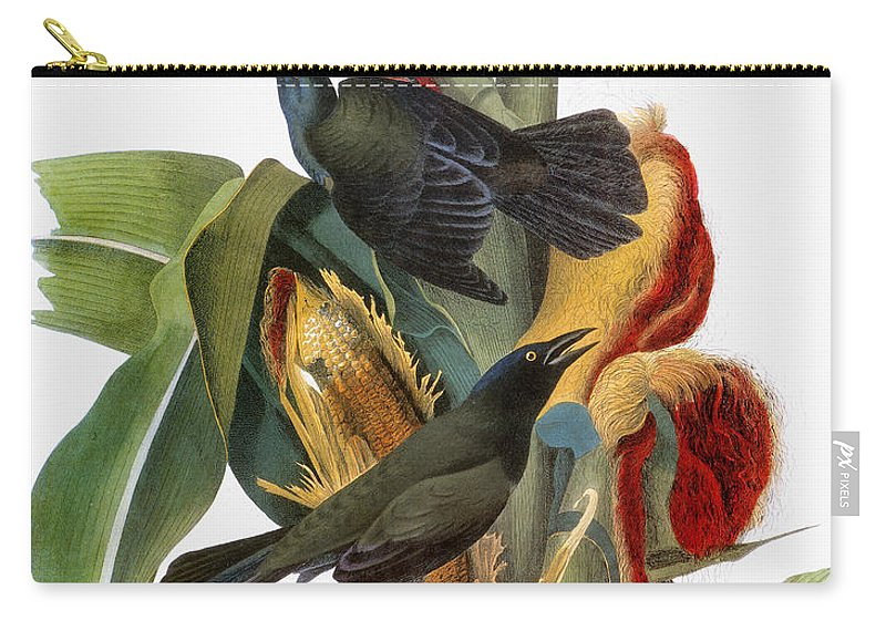 1838 Carry-all Pouch featuring the photograph Audubon: Grackle by Granger