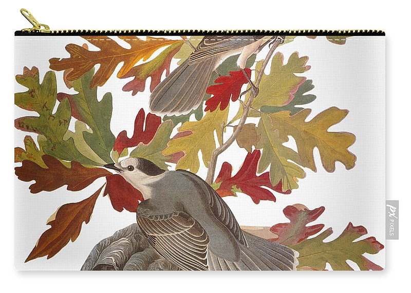 1838 Carry-all Pouch featuring the photograph Audubon: Jay by Granger