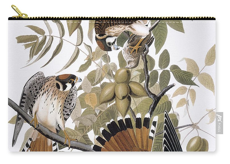 1827 Carry-all Pouch featuring the photograph Audubon: Kestrel, 1827 by Granger