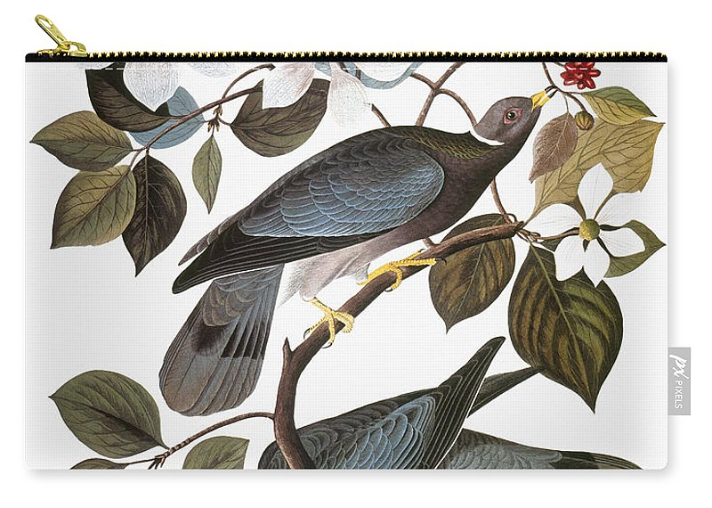 1838 Carry-all Pouch featuring the photograph Audubon: Pigeon by Granger