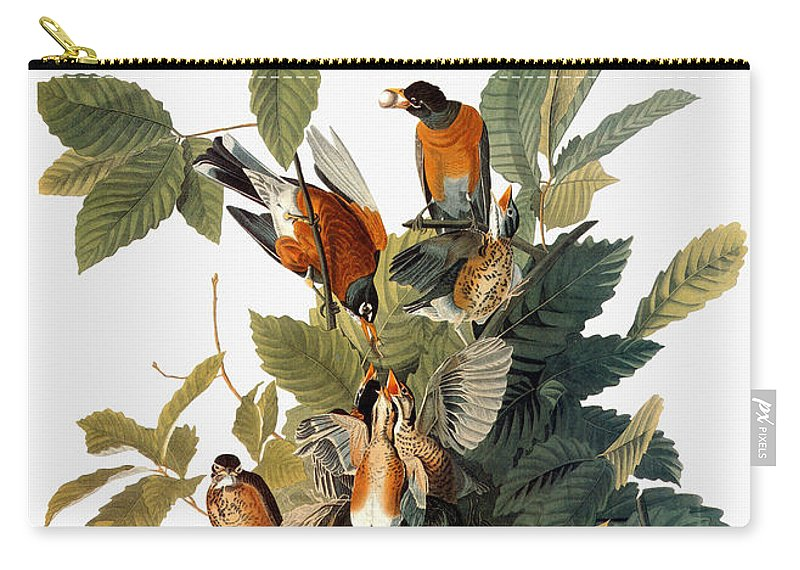 1838 Carry-all Pouch featuring the photograph Audubon: Robin by Granger