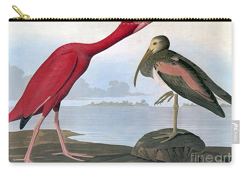 1820s Carry-all Pouch featuring the photograph Audubon: Scarlet Ibis by Granger