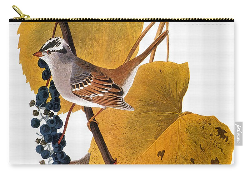1838 Carry-all Pouch featuring the photograph Audubon: Sparrow by Granger