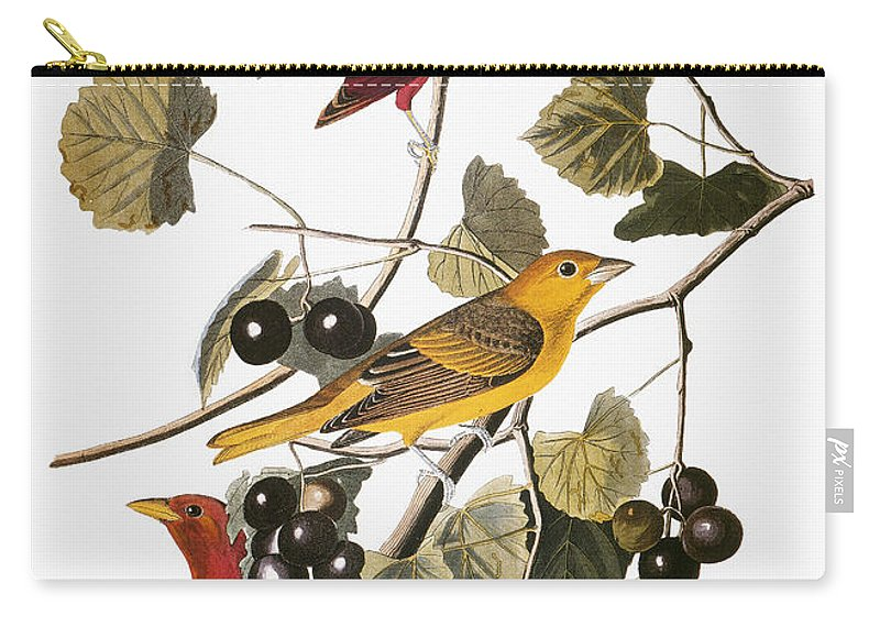 1838 Carry-all Pouch featuring the photograph Audubon: Tanager by Granger