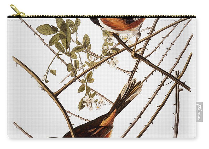 1838 Carry-all Pouch featuring the photograph Audubon: Towhee by Granger