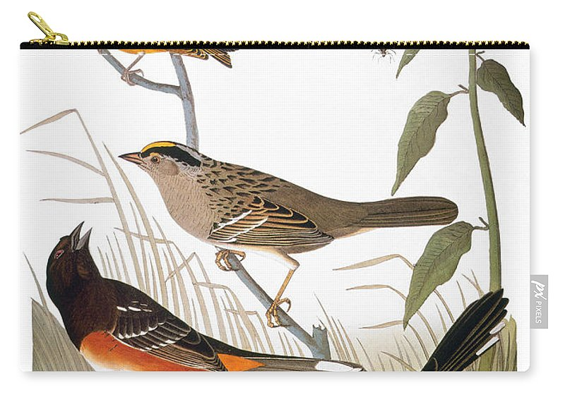 1838 Carry-all Pouch featuring the photograph Audubon: Various Birds by Granger