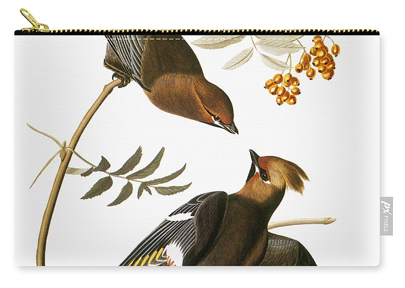 1838 Carry-all Pouch featuring the photograph Audubon: Waxwing by Granger