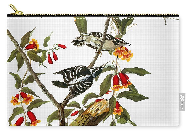 1827 Carry-all Pouch featuring the photograph Audubon: Woodpecker, 1827 by Granger