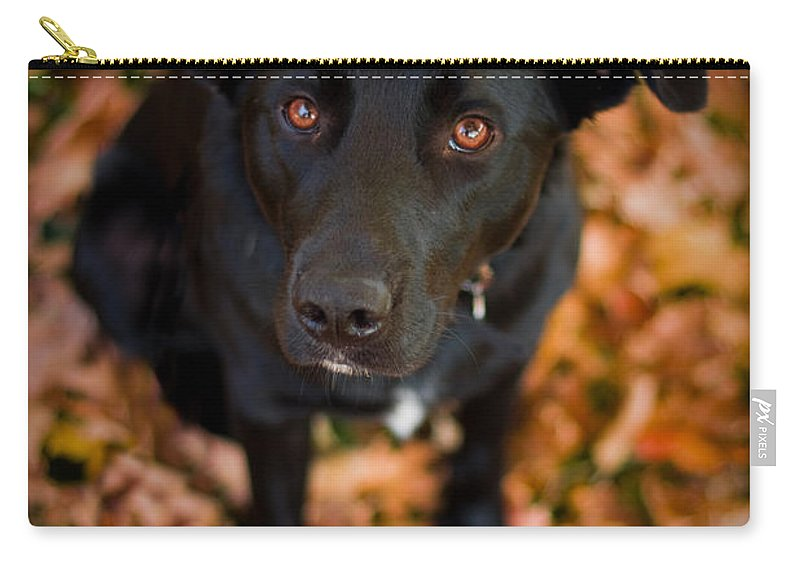 3scape Carry-all Pouch featuring the photograph Autumn Dog by Adam Romanowicz