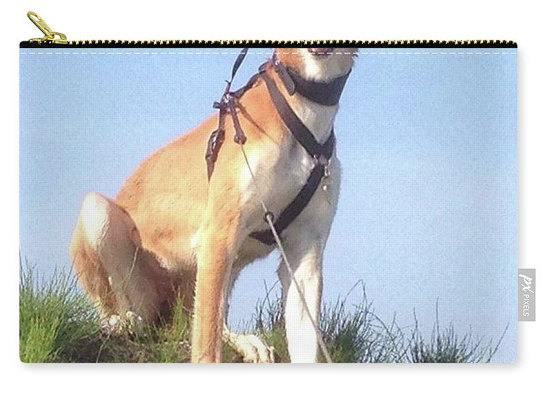 Salukilove Carry-all Pouch featuring the photograph Ava-grace, Princess Of Arabia  #saluki by John Edwards