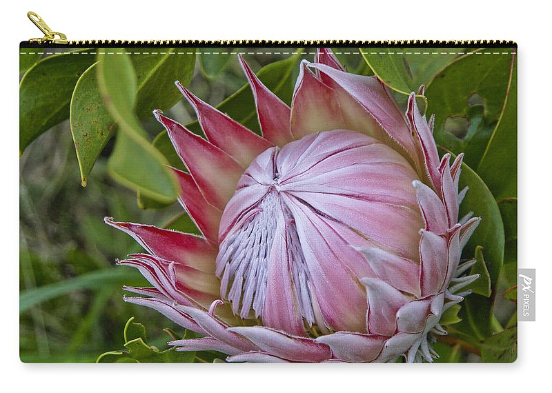 Africa Carry-all Pouch featuring the photograph Awakening by Michele Burgess