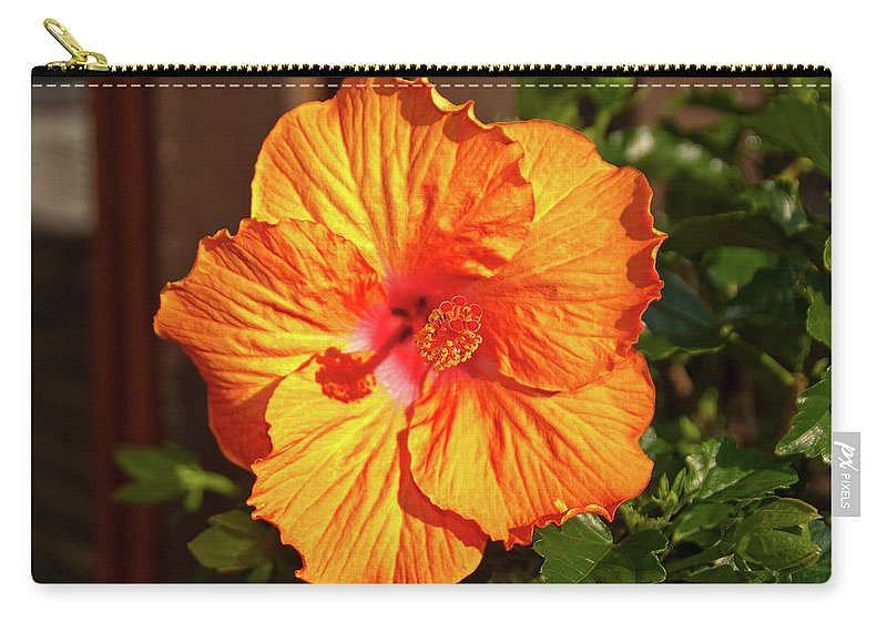 Flowers Carry-all Pouch featuring the photograph B Glavin Garden 11604 by Guy Whiteley