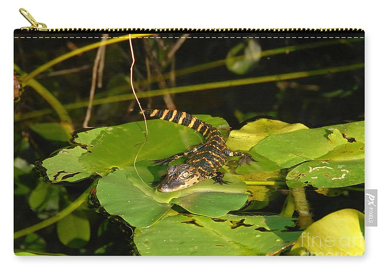 Baby Carry-all Pouch featuring the photograph Baby Alligator by David Lee Thompson