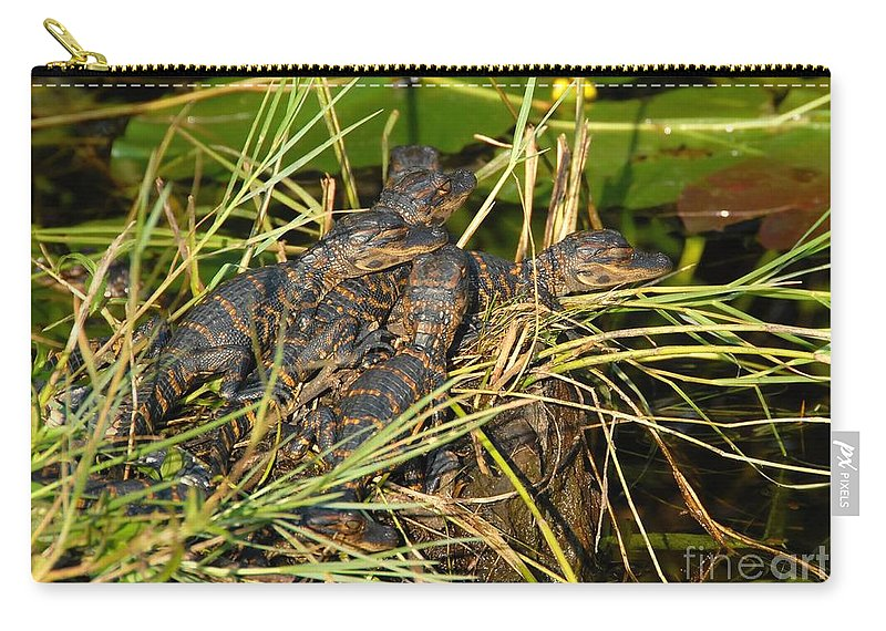 Alligators Carry-all Pouch featuring the photograph Baby Alligators by David Lee Thompson