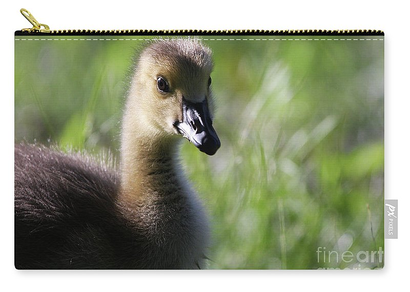 Canadian Geese Carry-all Pouch featuring the photograph Baby Canadian by Karol Livote