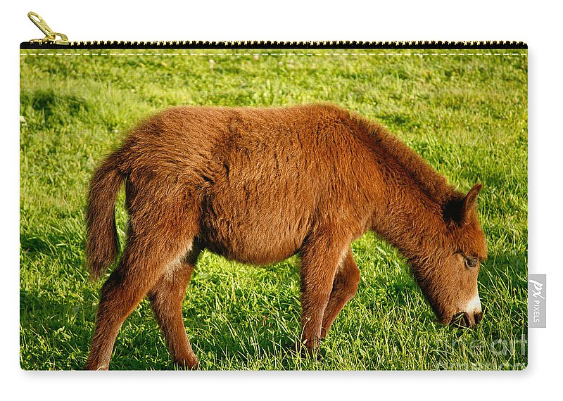 Animals Carry-all Pouch featuring the photograph Baby Donkey by Gaspar Avila