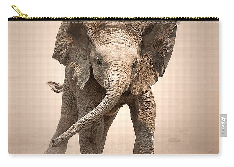 Elephant Carry-all Pouch featuring the photograph Baby Elephant mock charging by Johan Swanepoel