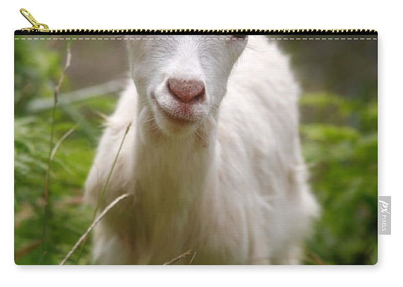 Animals Carry-all Pouch featuring the photograph Baby Goat by Gaspar Avila