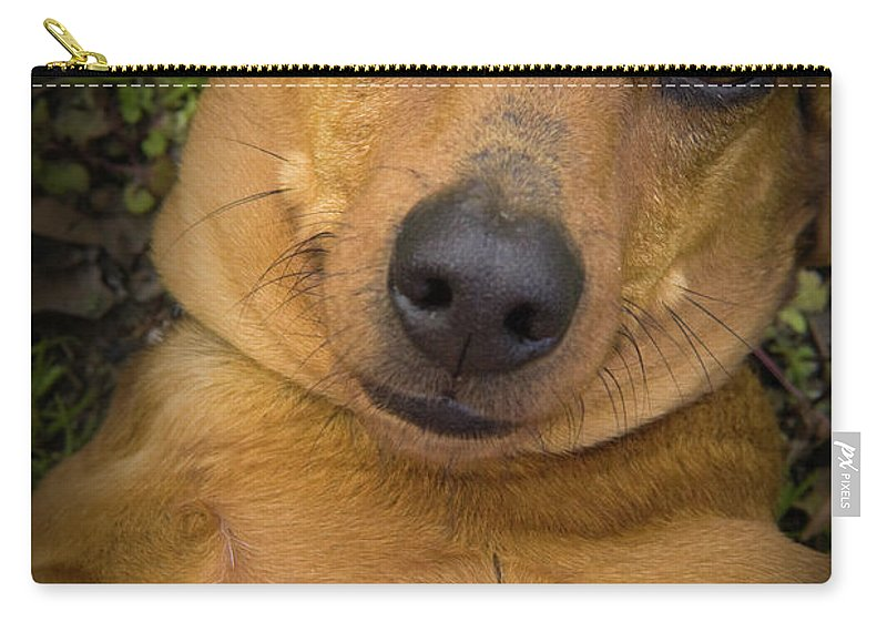 Dog Carry-all Pouch featuring the photograph Baby by Kim Henderson