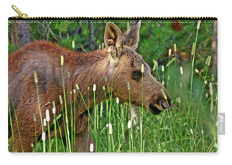 Moose Carry-all Pouch featuring the photograph Baby Moose by Scott Mahon
