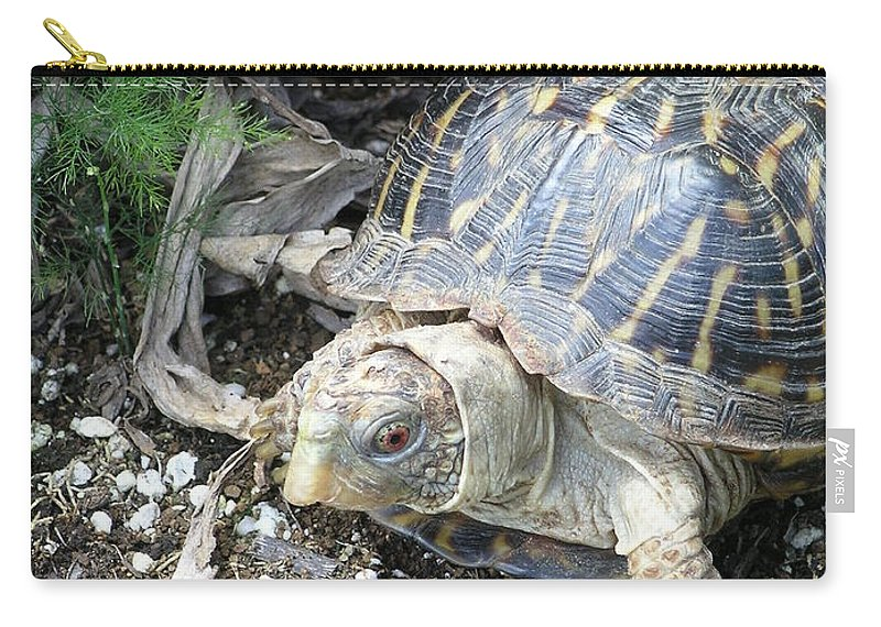Mary Deal Carry-all Pouch featuring the photograph Baby Tortoise by Mary Deal