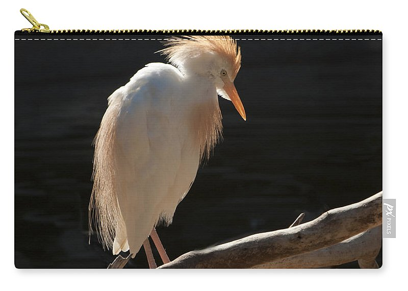 Bird Carry-all Pouch featuring the photograph Backlit Egret by Sandra Bronstein
