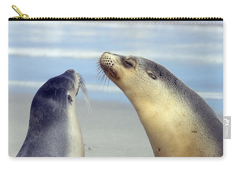 Sea Lion Carry-all Pouch featuring the photograph Backtalk by Mike Dawson