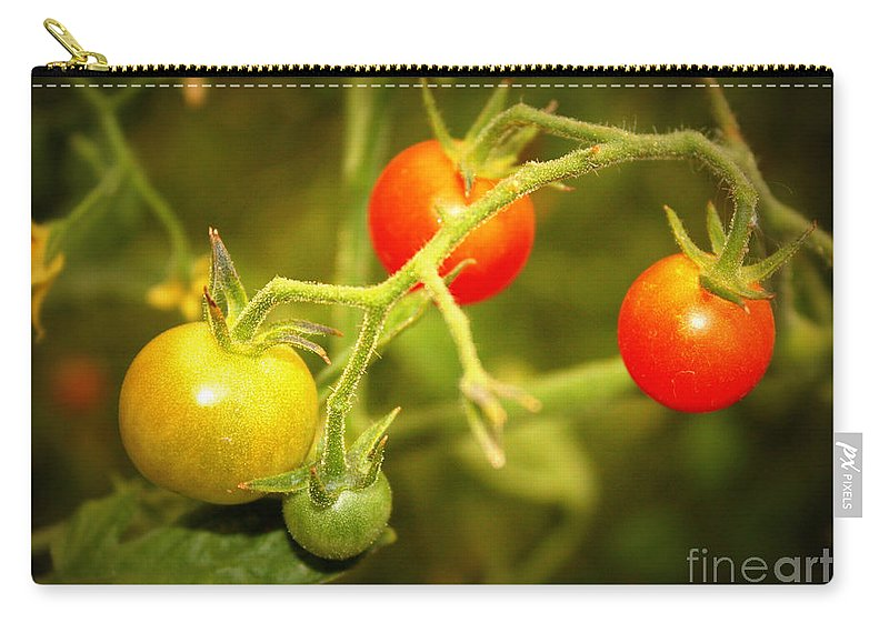 Food Carry-all Pouch featuring the photograph Backyard Garden Series - Cherry Tomatoes by Carol Groenen