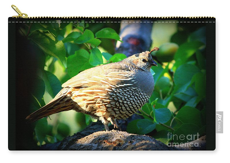 Backyard Garden Carry-all Pouch featuring the photograph Backyard Garden Series - Quail In A Pear Tree by Carol Groenen
