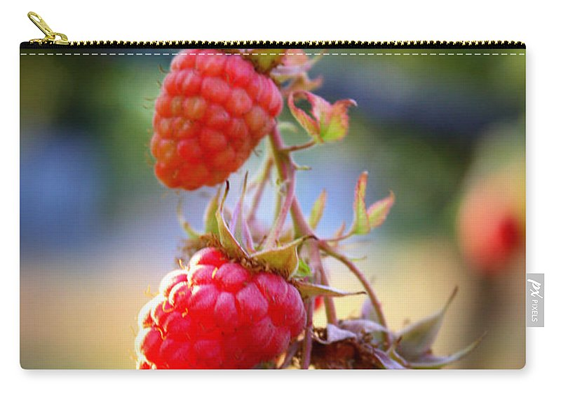 Food And Beverage Carry-all Pouch featuring the photograph Backyard Garden Series - The Freshest Raspberries by Carol Groenen