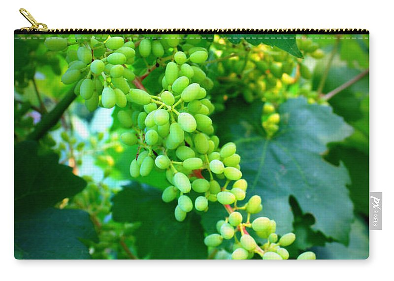 Grapes Carry-all Pouch featuring the photograph Backyard Garden Series - Young Grapes by Carol Groenen