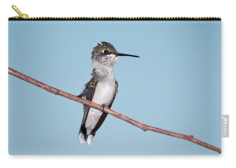 Ruby-throated Hummingbird; Archilochus Colubris; Ruby-throated Hummingbirds; Hummingbird; Male; Bird; Avian; Ornithology; Photograph Carry-all Pouch featuring the photograph Bad Feather Day by Betty LaRue