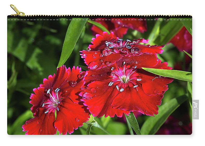 Dianthus Carry-all Pouch featuring the photograph Balancing Raindrops by Phyllis Denton