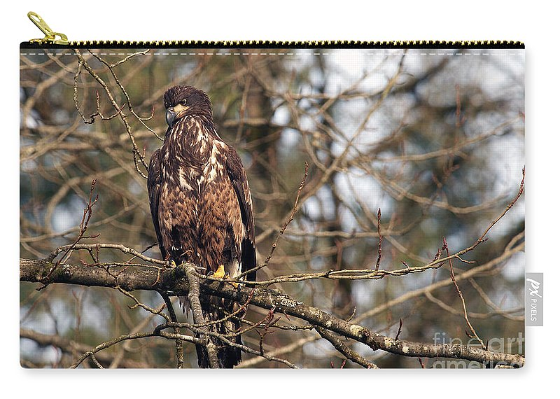 Bald Eagle Carry-all Pouch featuring the photograph Bald Eagle Juvenile 2 by Sharon Talson