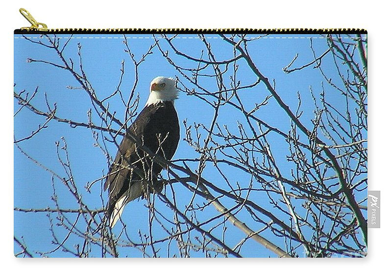 Bald Carry-all Pouch featuring the photograph Bald Eagle by Louise Magno