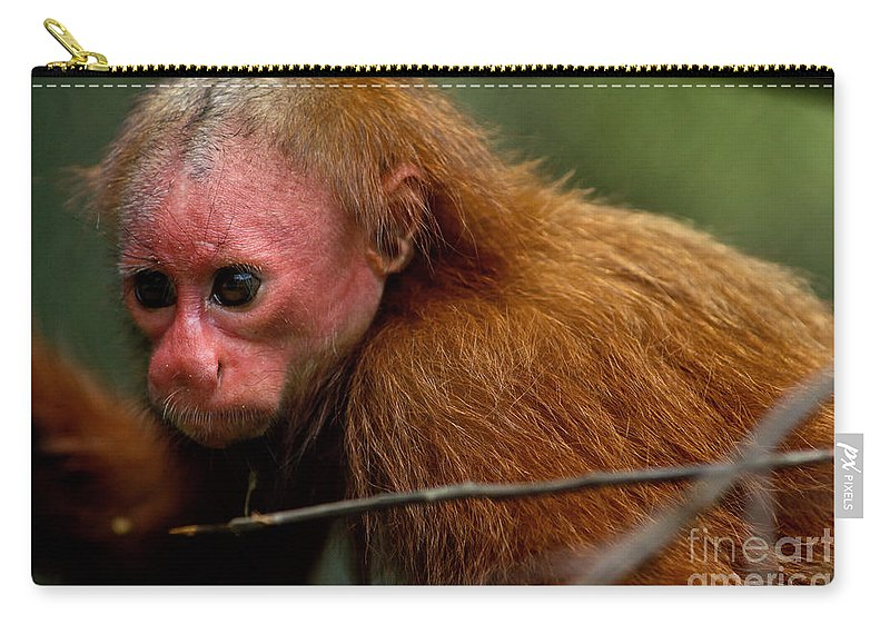 Red Bald-headed Uacari Carry-all Pouch featuring the photograph Bald Uakari Monkey by Dant� Fenolio