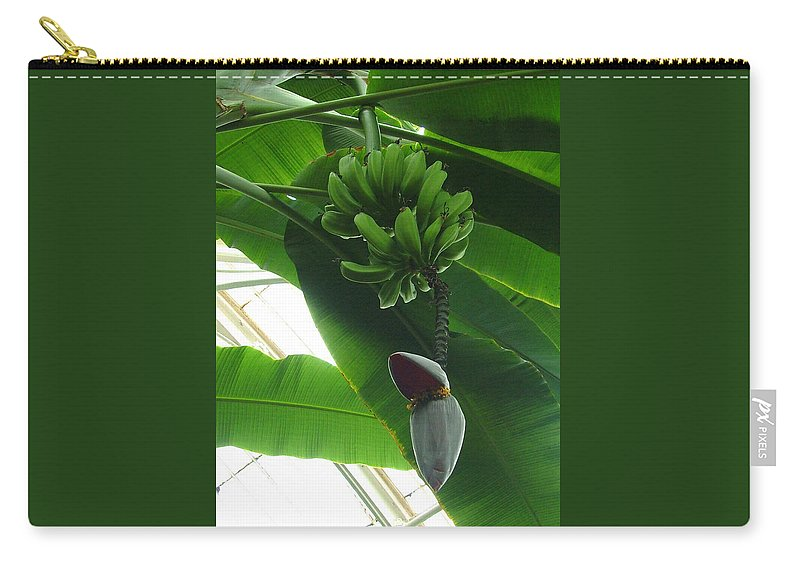 Kew Carry-all Pouch featuring the photograph Banana Plant Kew London England by Heather Lennox