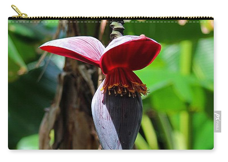 Banana Carry-all Pouch featuring the photograph Banana Tree --plantain II by Michiale Schneider