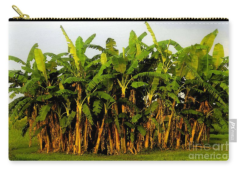 Banana Trees Carry-all Pouch featuring the painting Banana Trees by David Lee Thompson