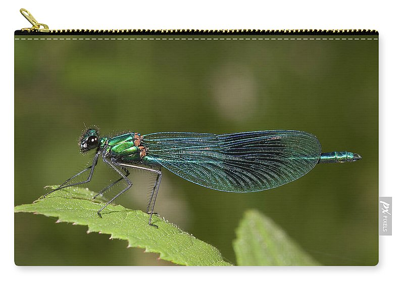 Dragonfly Carry-all Pouch featuring the photograph Banded Demoiselle by Bob Kemp