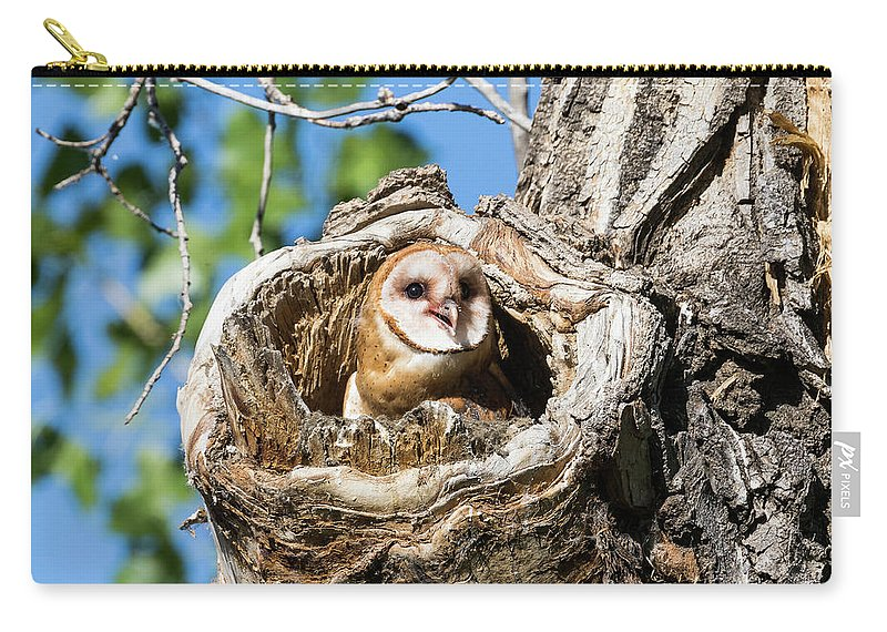 Barn Owl Carry-all Pouch featuring the photograph Barn Owl Owlet Says Hello To The World by Tony Hake