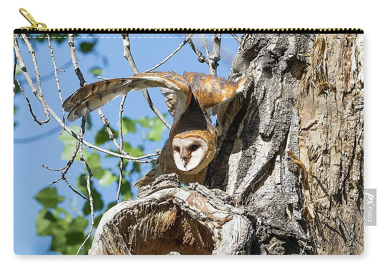 Barn Owl Carry-all Pouch featuring the photograph Barn Owl Owlet Stretches High by Tony Hake