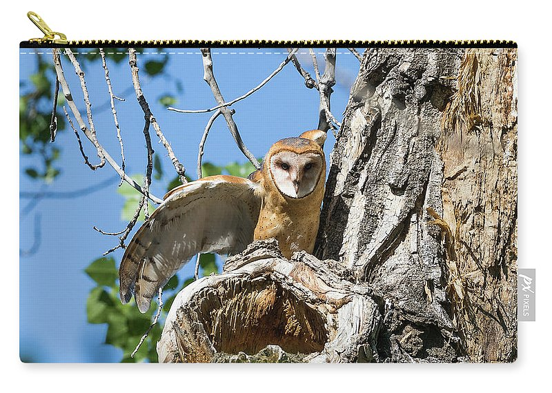 Barn Owl Carry-all Pouch featuring the photograph Barn Owl Owlet Stretches by Tony Hake