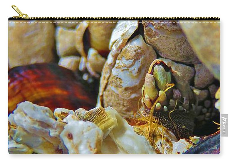 Barnacles Carry-all Pouch featuring the photograph Barnacles by Mel Manning