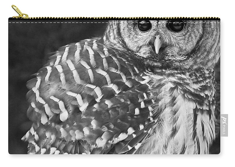 Barred Owl Carry-all Pouch featuring the photograph Barred Owl Beauty by Emma England