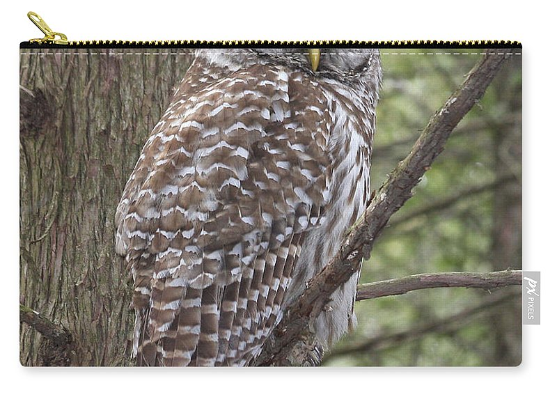 Barred Owl Carry-all Pouch featuring the photograph Barred Owl by Doris Potter
