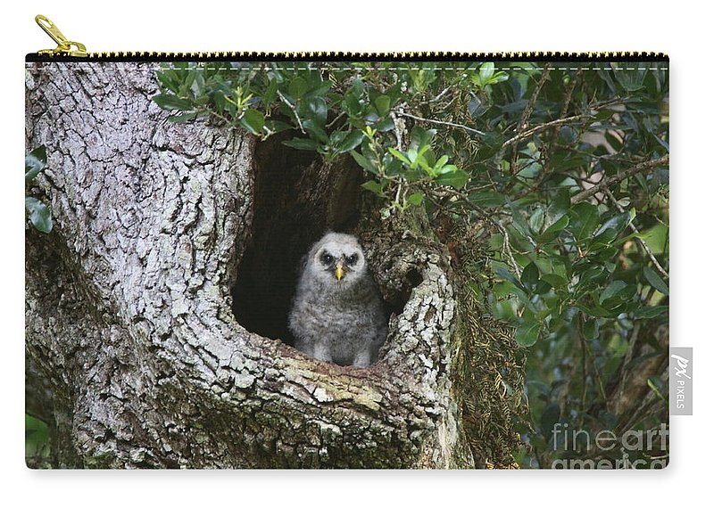 Owls Carry-all Pouch featuring the photograph Barred Owlet by Myrna Bradshaw
