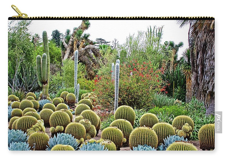 Barrel Cacti And Other Desert Plants In Huntington Desert Gardens In