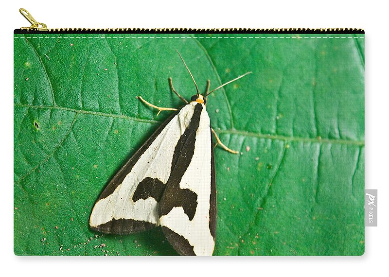 Moth Carry-all Pouch featuring the photograph Batman On A Moth by Douglas Barnett
